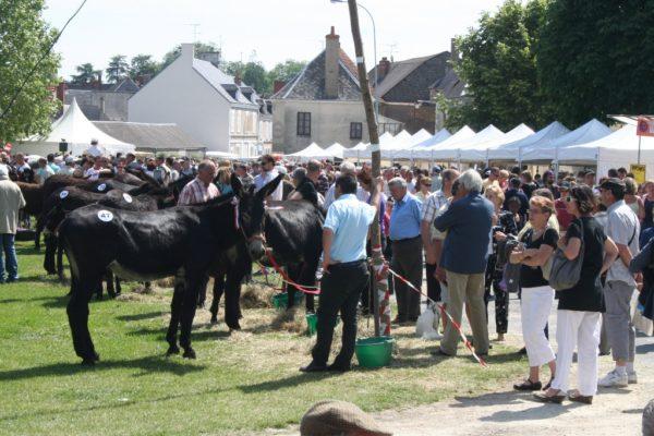 concours a la foire aux anes et aux mules de lignieres en berry 2013