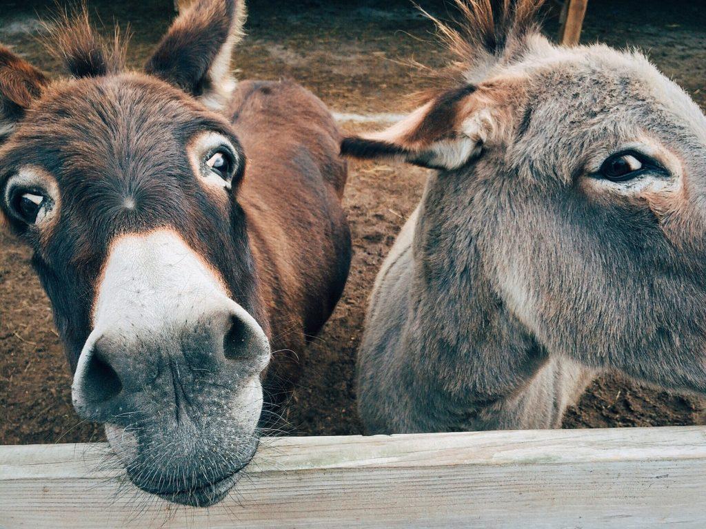 animals-close-up-cute-208821