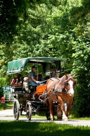 attelage-au-pole-du-cheval-et-de-lane2015-2