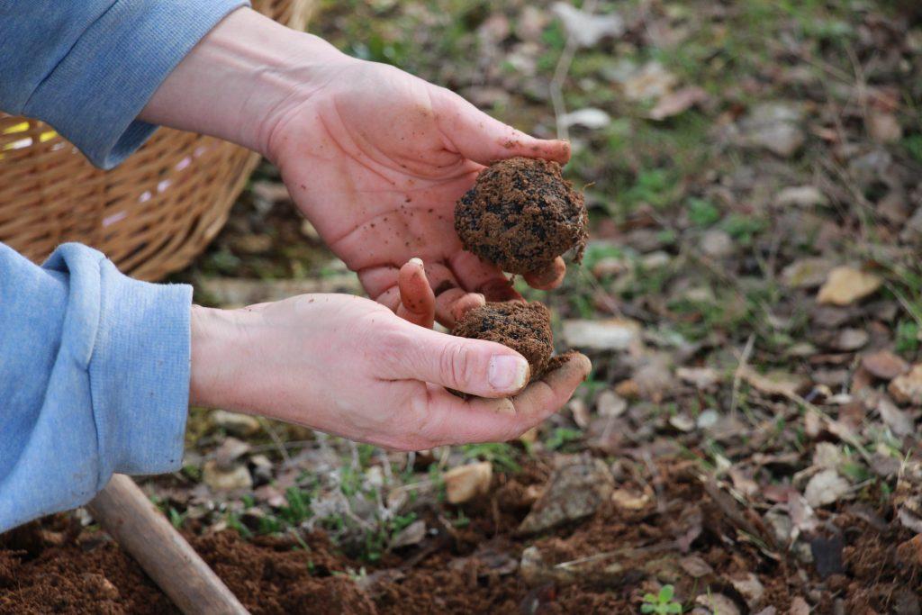 truffe-noire-du-berry